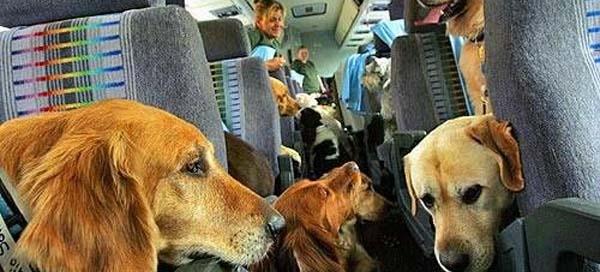 pets-cargo