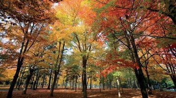 Maine Fall Foliage — a colorful secret
